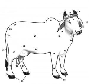 Importance of Cow Hindu Vedas Purana